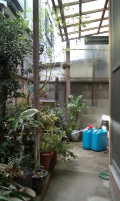 庭志から庭師へ-城陽市G邸2