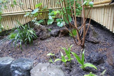 庭志から庭師へ-城陽市G邸3