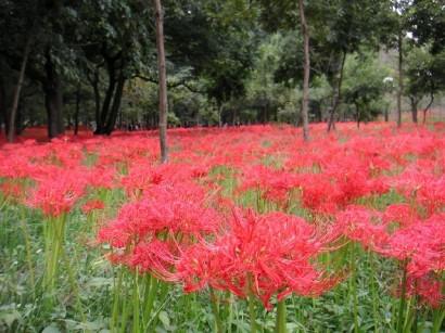 庭志から庭師へ-higan03