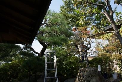 庭志から庭師へ-matsuda5