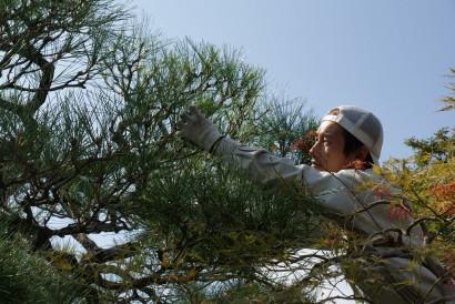 庭志から庭師へ-matsuda7